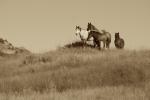 Wild Horses landscape sepia Teddy Roosevelt NP NDIMG_0008316