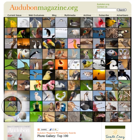 Sparky makes Audubon Magazine Top 100