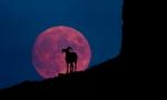 Bighorn & Moon Composite YellowstoneWY