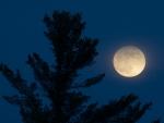 Full Moon White Pine Carlton Co MNIMG_1165