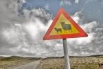 Sheep signage Iceland IMG_2233 copy__tonemapped copy
