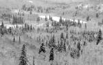 SparkyStensaas-Spruces&snowJayCookeS.P