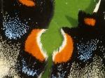 Tiger Swallowtail scale detail Sax-Zim Bog MNIMG_0037219