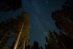 Milky Way and Ponderosa Pines Yellowstone N.P. WY IMG_0068061copy