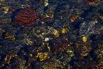 Stream rocks poster edges Yellowstone N.P. WY IMG_0069200copy