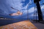 Ring-billed Gull Duluth MN tungsten w-2 1-2 CTO gels on flashIMG_0065785