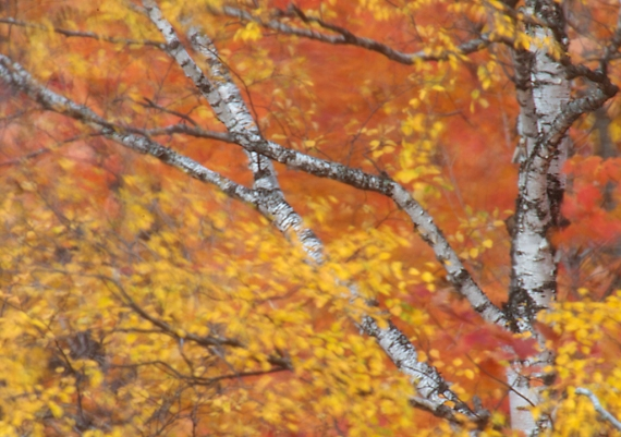 11-Best2012 blurred leaves Rock Pond Duluth MN IMG_0067511
