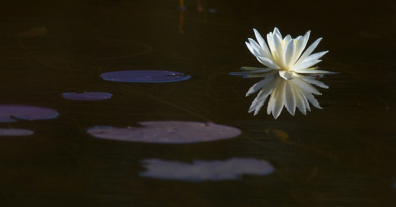 15-Best2012 water lily File0169