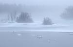 18-Best2012 Swans geese St. Louis River fog Fond du Lac MNIMG_0055161
