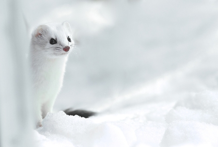 White Critters of Winter