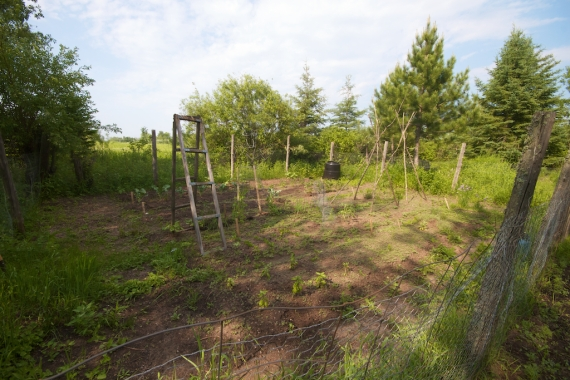 garden July 5 Skogstjarna Carlton Co MN IMG_8533