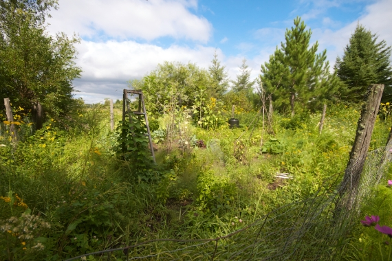 garden Sept 1 Skogstjarna Carlton Co MN IMG_4930