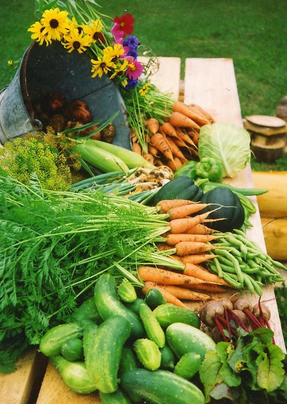 garden vegetables Skogstjarna
