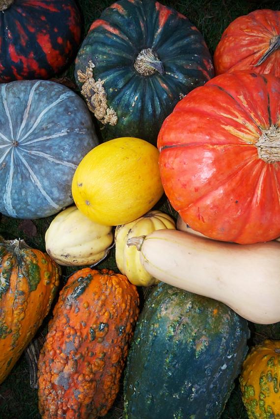 Gourds Carlton Co MN IMG_0051527