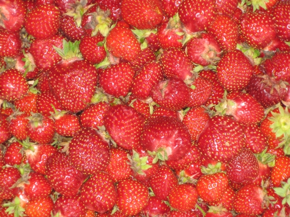 Strawberries IMG_0632