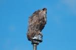 Owl decoy feather dusterIMG_7590