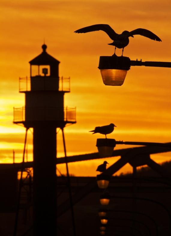 Herring Gulls lighthouse sunset Canal Park Duluth MN IMG_9938