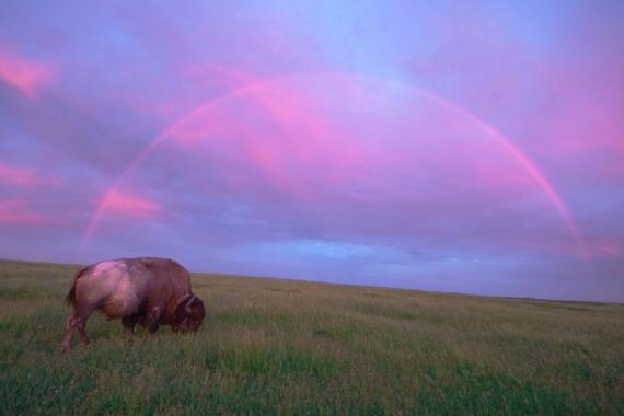 Bison Rainbow Blue Mounds-Stensaas copy