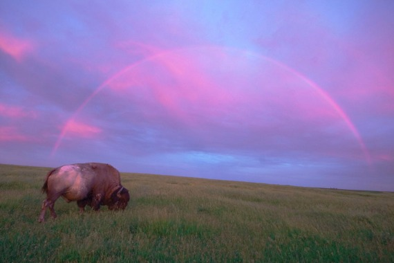 Bison Rainbow Blue Mounds-Stensaas copy