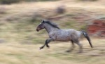 Wild Horse Theodore Roosevelt National Park NDIMG_9293