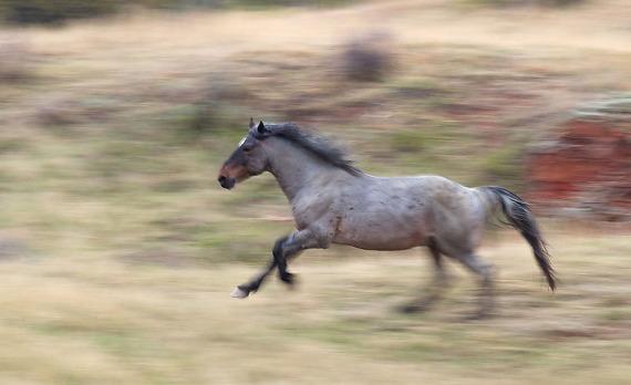 Wild Horse Theodore Roosevelt National Park ND IMG_9293