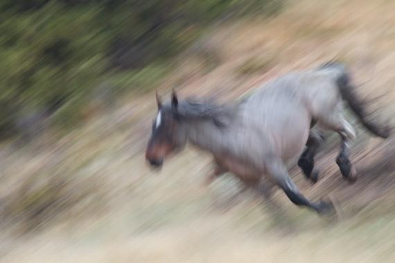 Wild Horse Theodore Roosevelt National Park ND IMG_9304