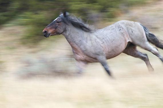 Wild Horse Theodore Roosevelt National Park ND IMG_9306