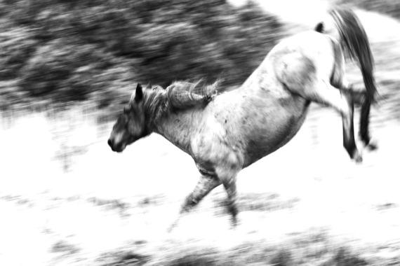 Wild Horse Theodore Roosevelt National Park ND IMG_9310