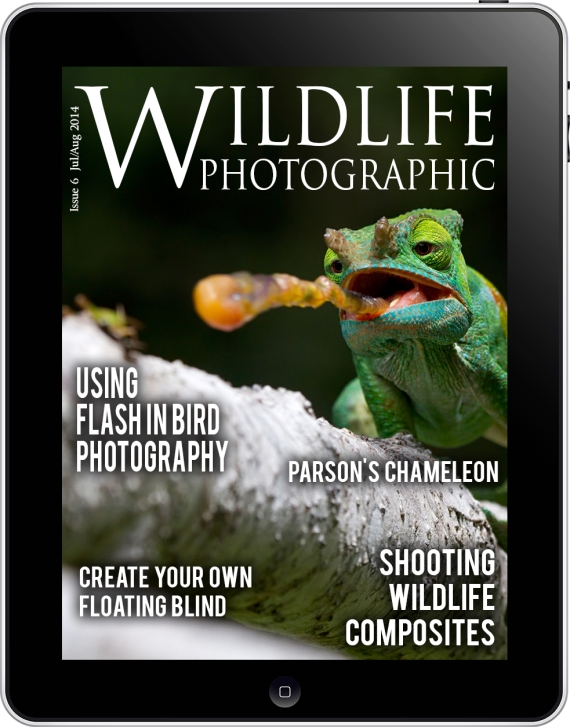 Wildlife Photographic issue_6_cover