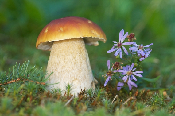 11 Tips for Fantastic Fungi Photos