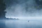 Common Loon Blue Fog Twin Lake Cook Co MNIMG_002870