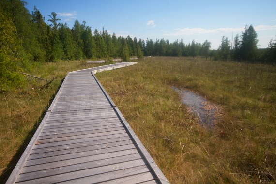 Brokenhead Bog Boardwalk Selkirk Manitoba IMG_0475