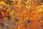 Canada Geese-FallColors-RockPond