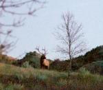 Elk bull sunset Teddy Roosevelt National Park NDIMG_5906