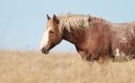 Wild Horses Teddy Roosevelt National Park NDIMG_5363