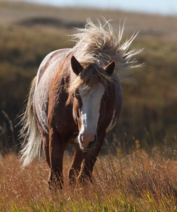 Wild Horses Teddy Roosevelt National Park ND IMG_5465
