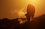 Bison backlit sunrise Teddy Roosevelt National Park NDIMG_5999