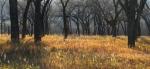 Cottonwoods Little Missouri River Roosevelt National Park NDIMG_6299
