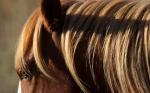 Wild Horses Teddy Roosevelt National Park NDIMG_6172