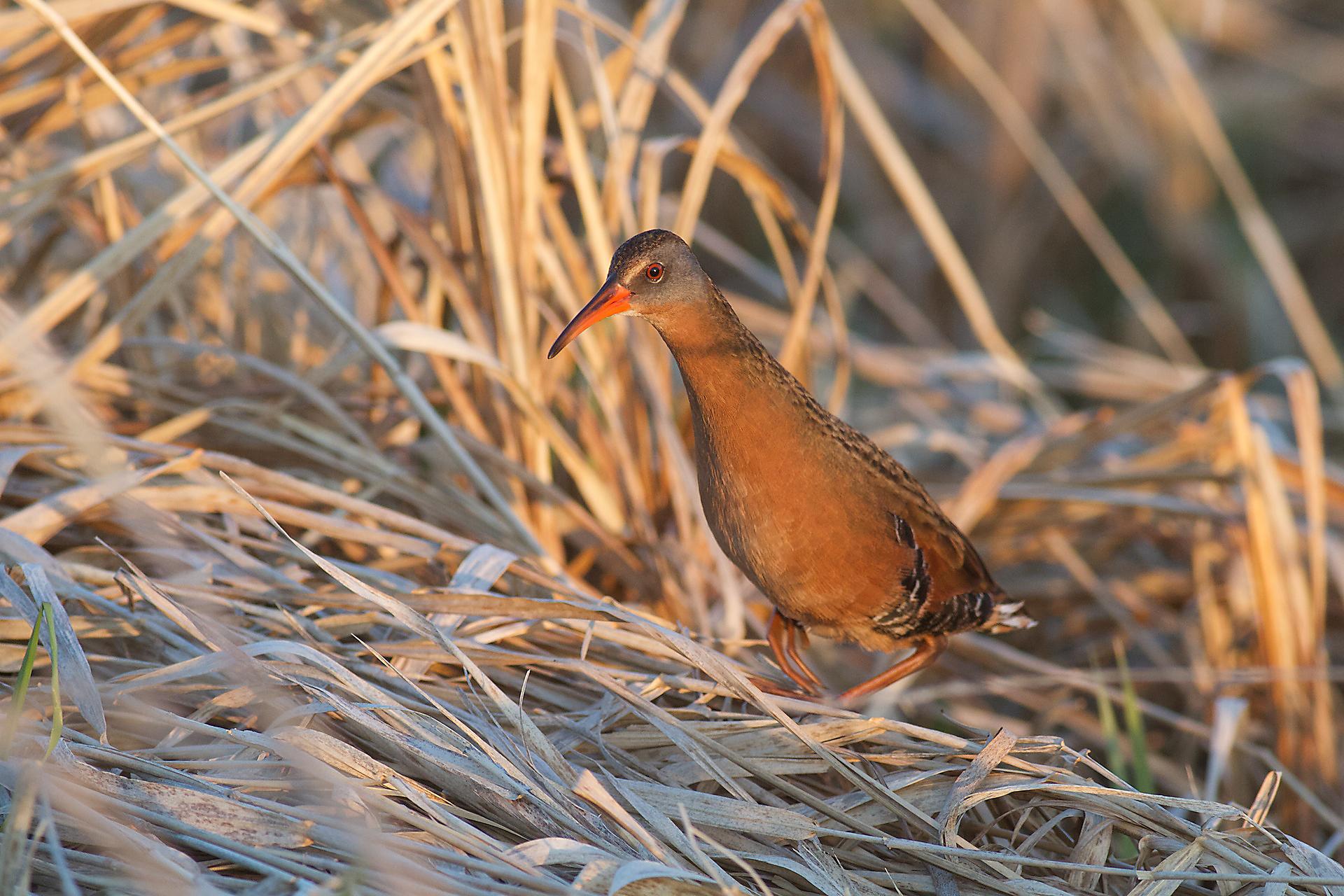 best bird photos 2015 the photonaturalist