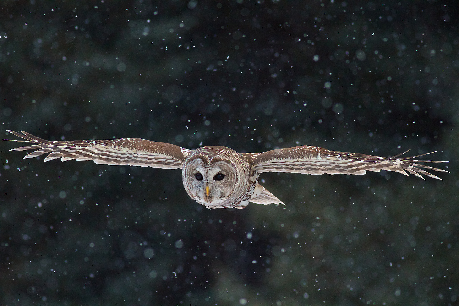 сова когда летают фото