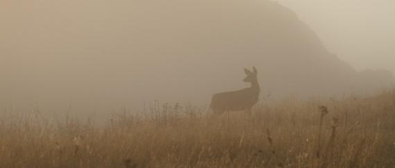 Mule Deer Teddy Roosevelt National Park Medora ND IMG_6229 (1)