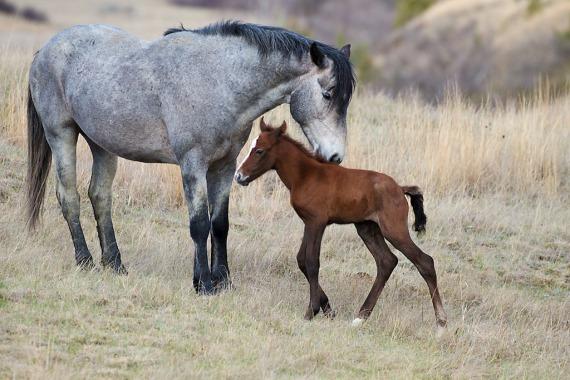 Wild Horse Teddy Roosevelt National Park Medora ND IMG_6094 (1)