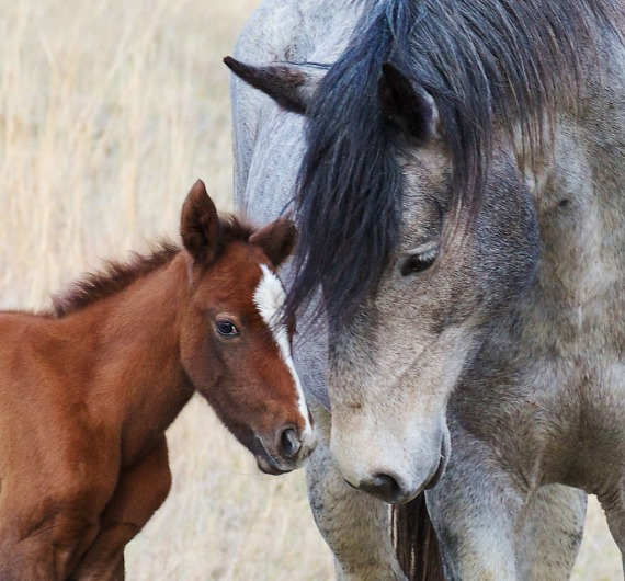 Wild Horse Teddy Roosevelt National Park Medora ND IMG_6107 (1)