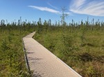 Big Bog BoardwalkIMG_3443