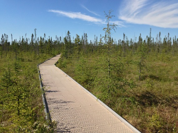 Big Bog Boardwalk IMG_3443