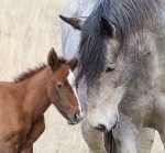 wild-horse-teddy-roosevelt-national-park-medora-nd-img_6107