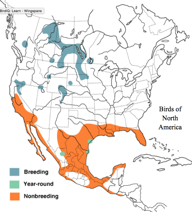 map American White Pelican North America Distribution Cornell