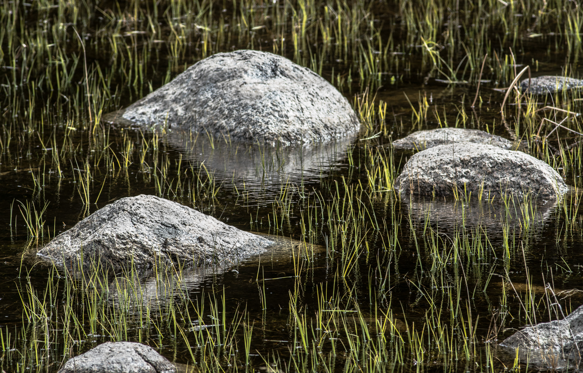 Rocks and sedges pattern Yellowstone National Park WY -05079