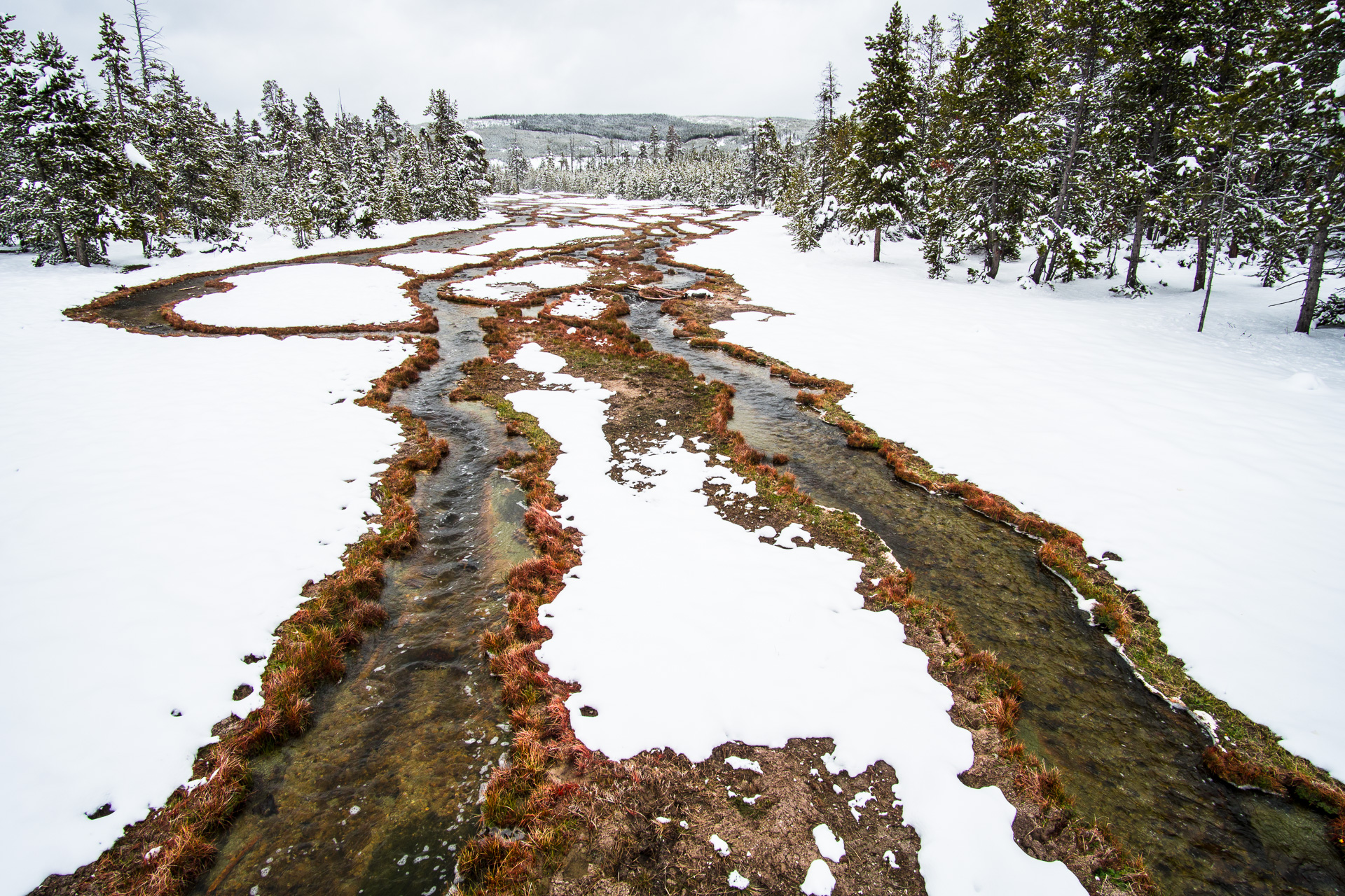Stream snow red sedges Yellowstone National Park WY -05607